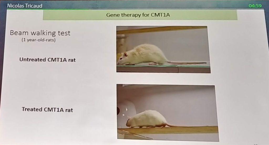 Terapia Genica CMT1A