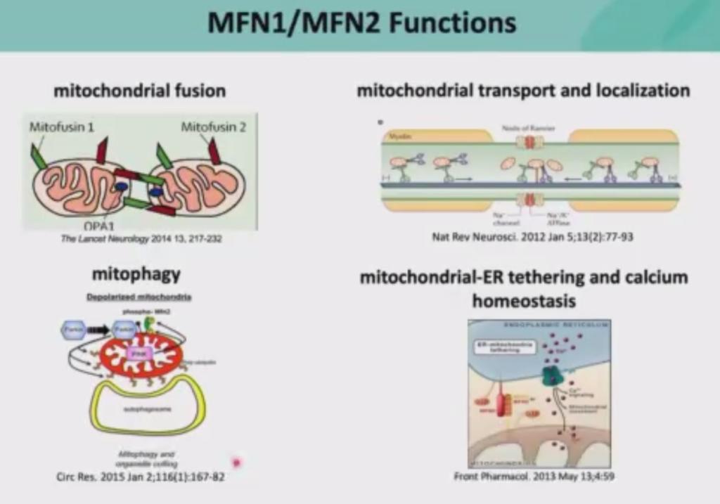 Il ruolo della Mitofusina 1 e 2 nella Charcot-Marie-Tooth - PNS2020